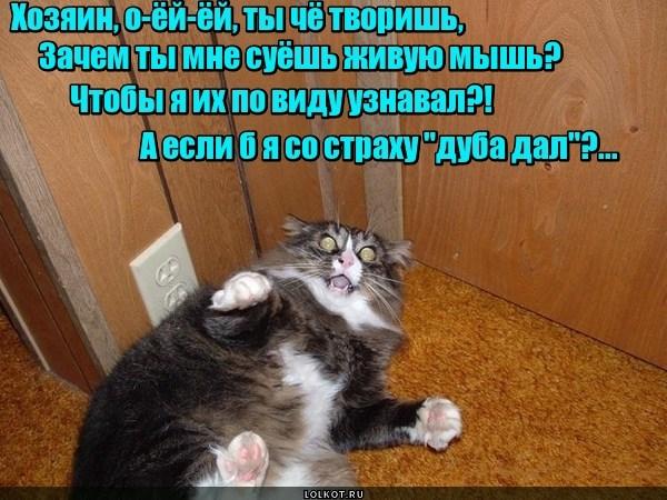 Нежная ранимая кошачья натура