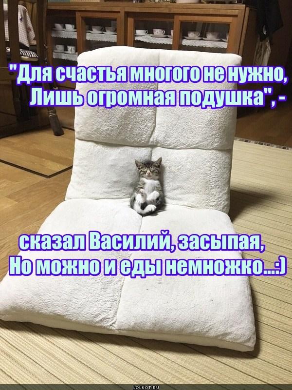 Большое счастье маленького кота