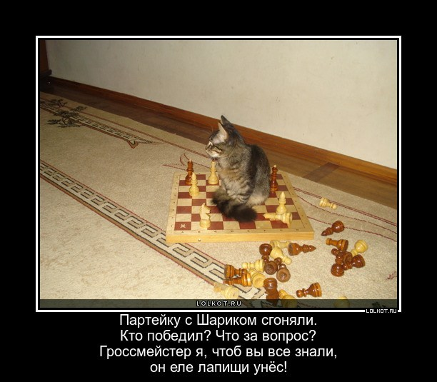 Несомненный гроссмейстер