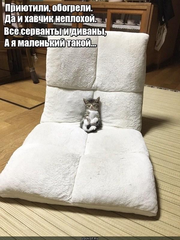 Пробник кота