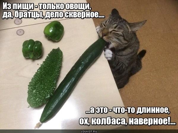 Зеленое заблуждение