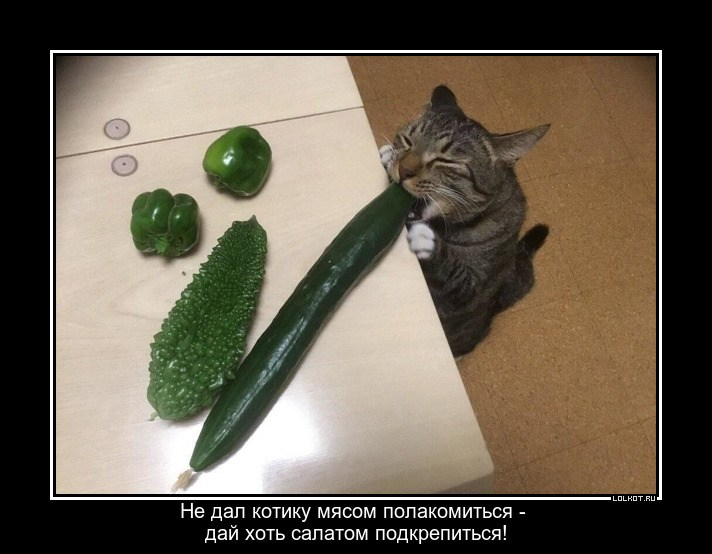 Хоть что-нибудь дай котику!