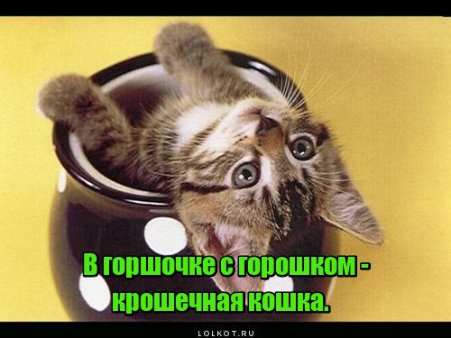 Кошка-горошка