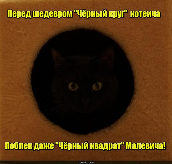 Шедевр кошачьей геометрии