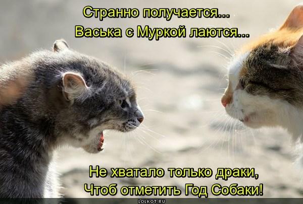 """Собачьи"" разборки"