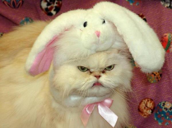 Кот в костюме кролика