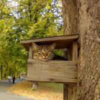 Кот в кормушке
