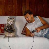 Кот играет на приставке